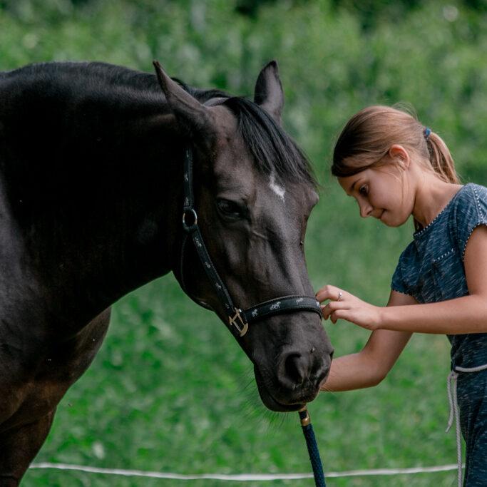 PAARDENCOACHING   coaching met paarden